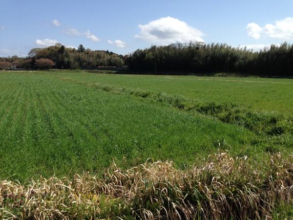 新麦コレクションツアー2016 VOL.2 収穫目前!日本で初めてドイツ古代小麦ディンケルの栽培を成功させた「大地堂」を訪ね パンヲカタル一日